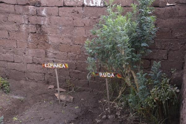 30 Mayo – Colocando los carteles en los biohuertos. Identificando cada cultivo.