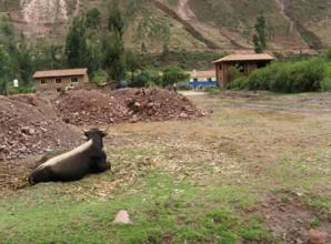 Desde el Biohuerto Educativo, una vista de la escuela, al fondo en azul, de la localidad de Vilcabamba (Cusco - Perú)