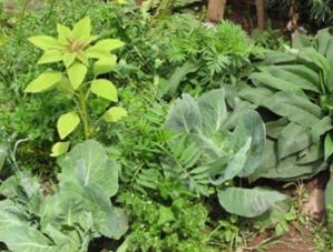 Diferentes tonos de verde de las especies que crecen al interior del Biohuerto Educativo de la escuela pública de Caicay (Cusco - Perú)