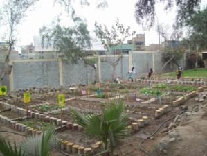 Biohuerto Educativo en el distrito de Comas (Lima - Perú)