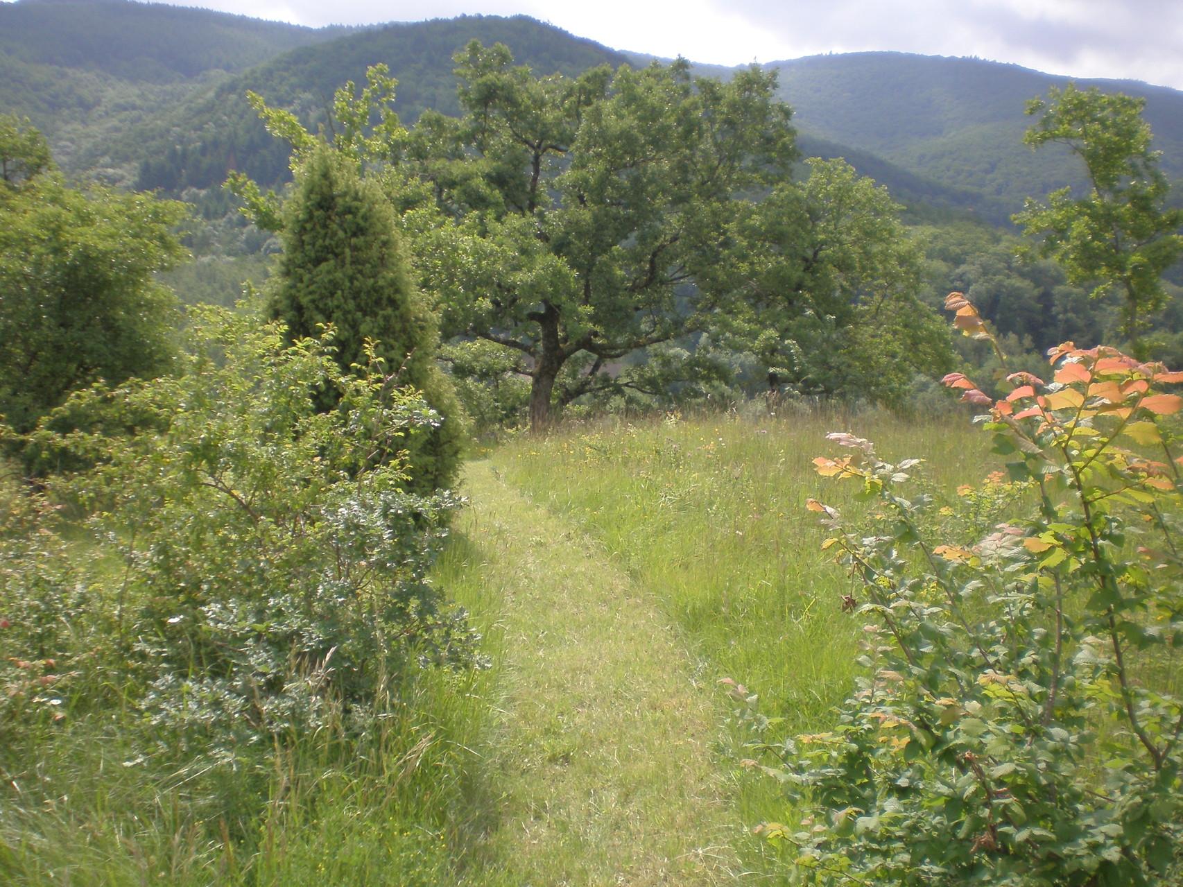 sur place randonnée botanique dans le parc naturel régional du haut languedoc