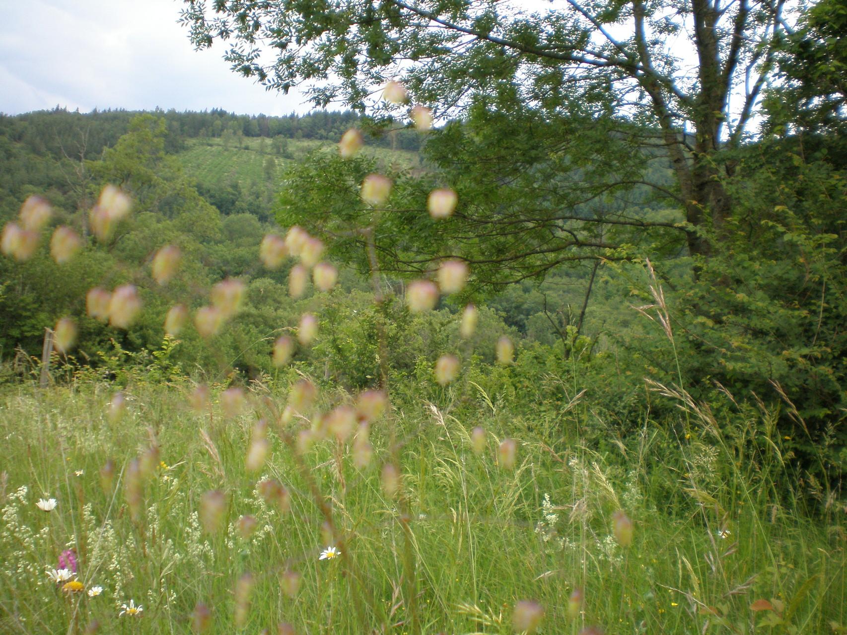 graminées et fleurs pour les insectes