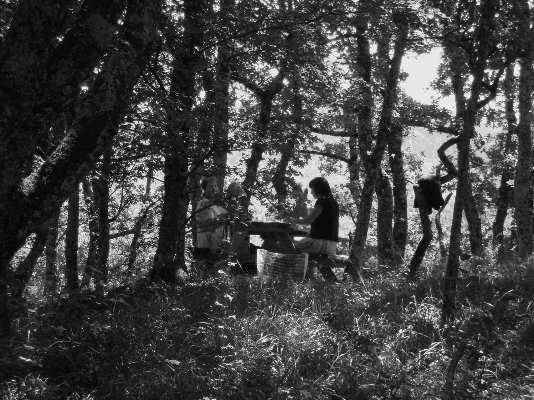 pique-nique en forêt
