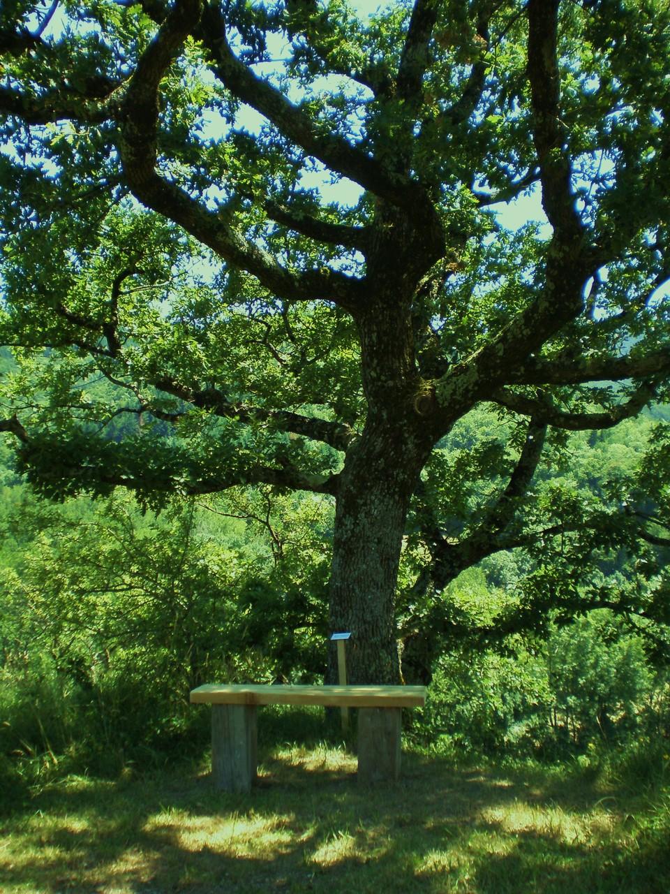 le banc sous le chêne