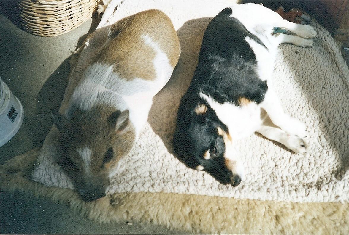 Chili mit Schweinchen Knirps