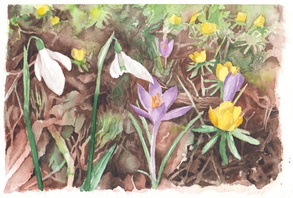Frühlingspfad im Botanischen Garten (Aquarellpapier, 12x16m)