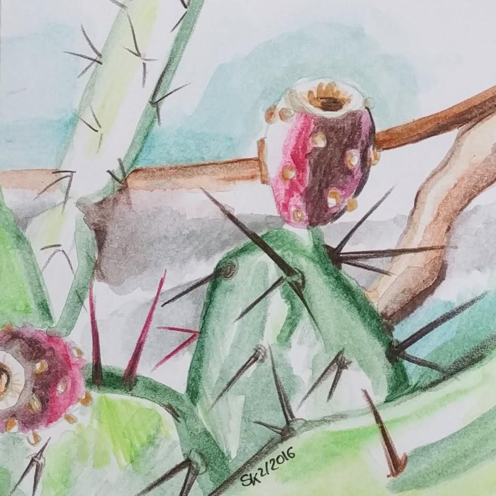 Kaktusfrucht (Zeichenpapier, 9x9cm)