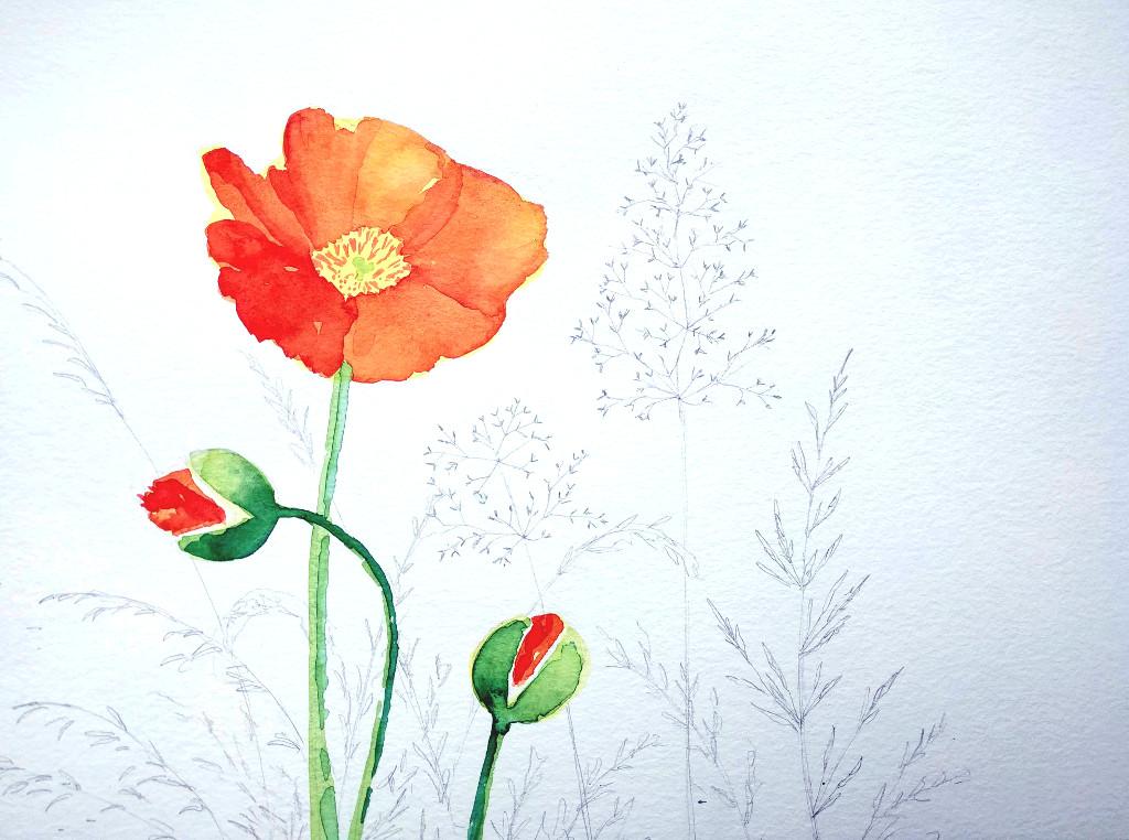 Mohnblume mit Gräsern (Aquarellpapier, 30x40cm)