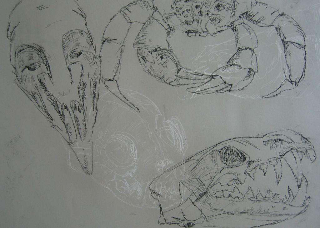 Krabben (Zeichenpapier, DIN A2)