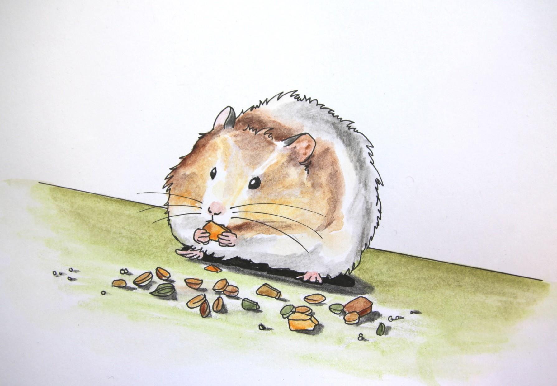 Hamsterbacke (Zeichenpapier, 10x13cm)