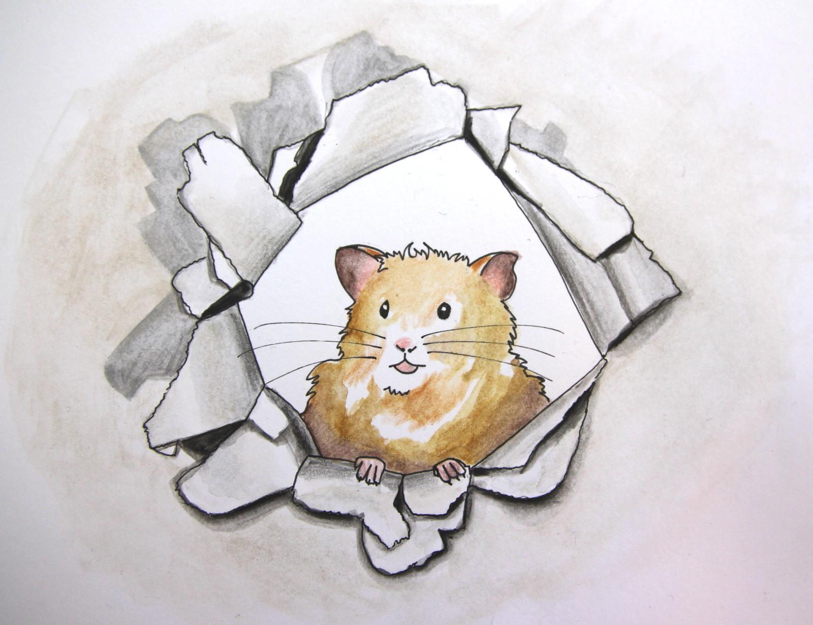 Hamster lugt in die Freiheit (Zeichenpapier, 10x13cm)