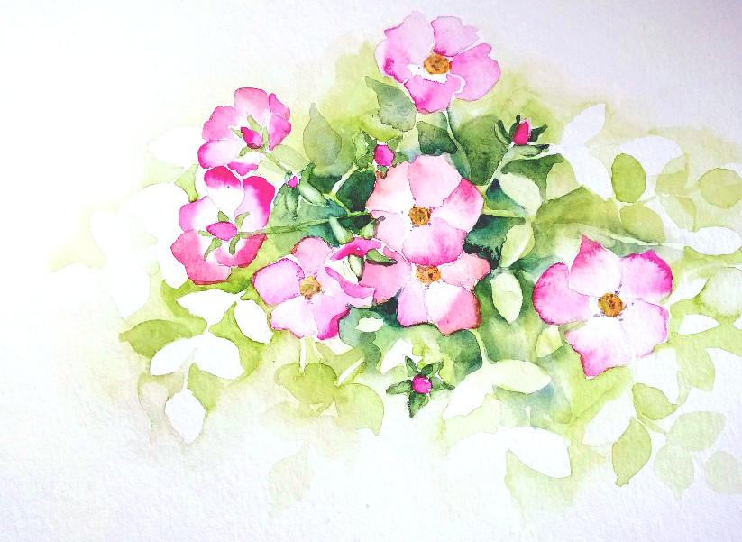 Heckenrose im Botanischen Garten (Aquarellpapier, 30x40cm)
