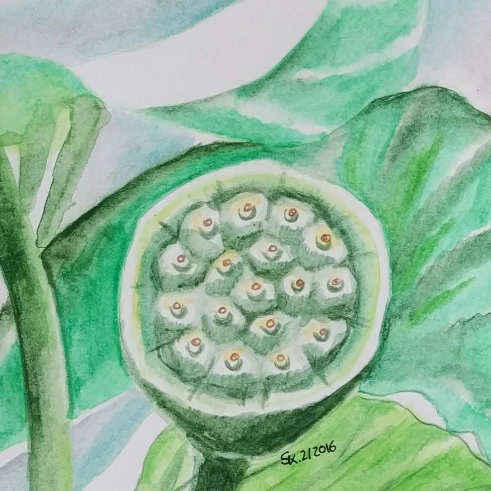Fruchtstand (Zeichenpapier, 9x9cm)