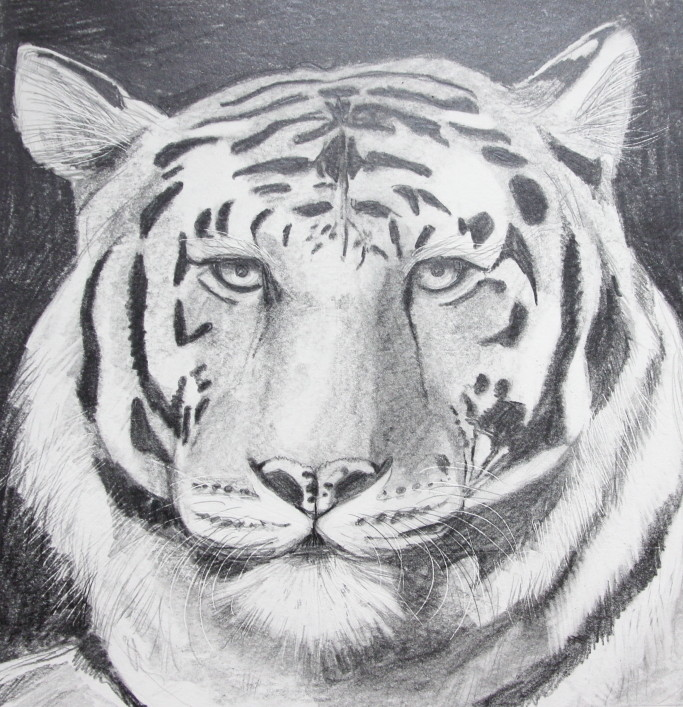 Tiger Portrait (Zeichenpapier, 21x21cm)