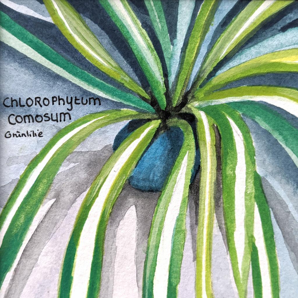 Grünlilie (Aquarellpapier, 9x9cm)