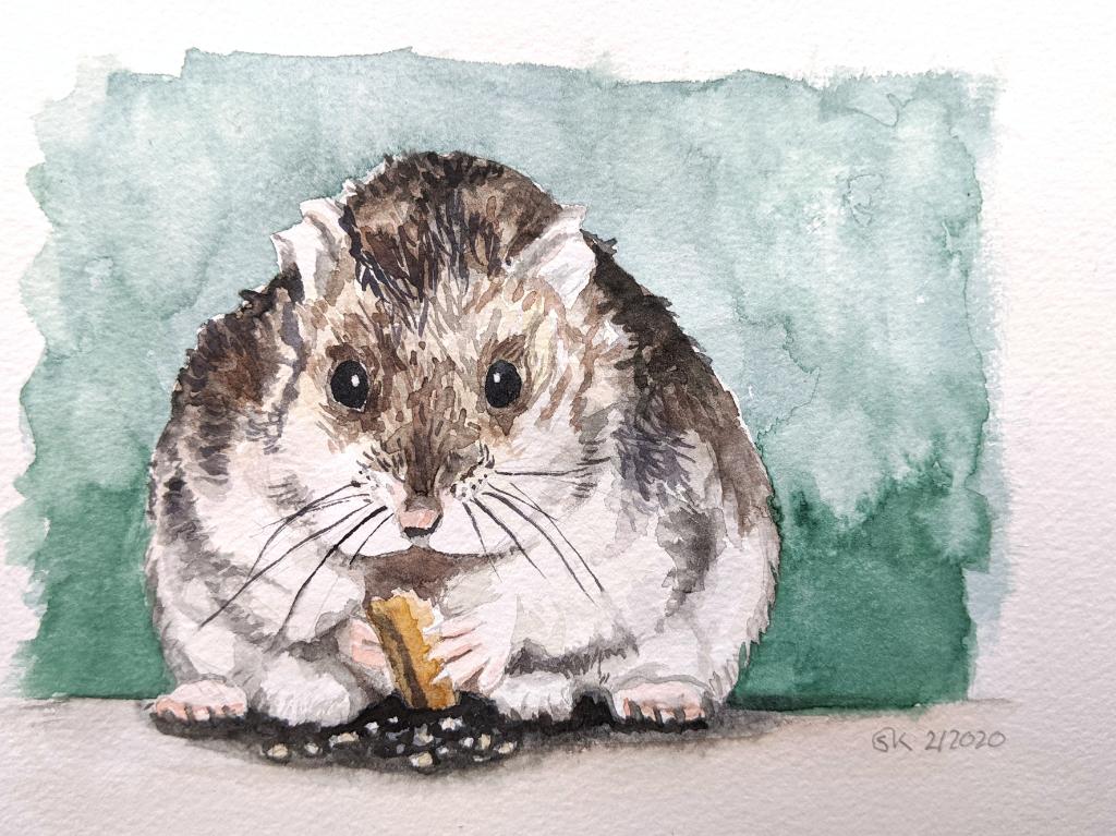 Hamster knuspert (Aquarellpapier, 15x10cm)