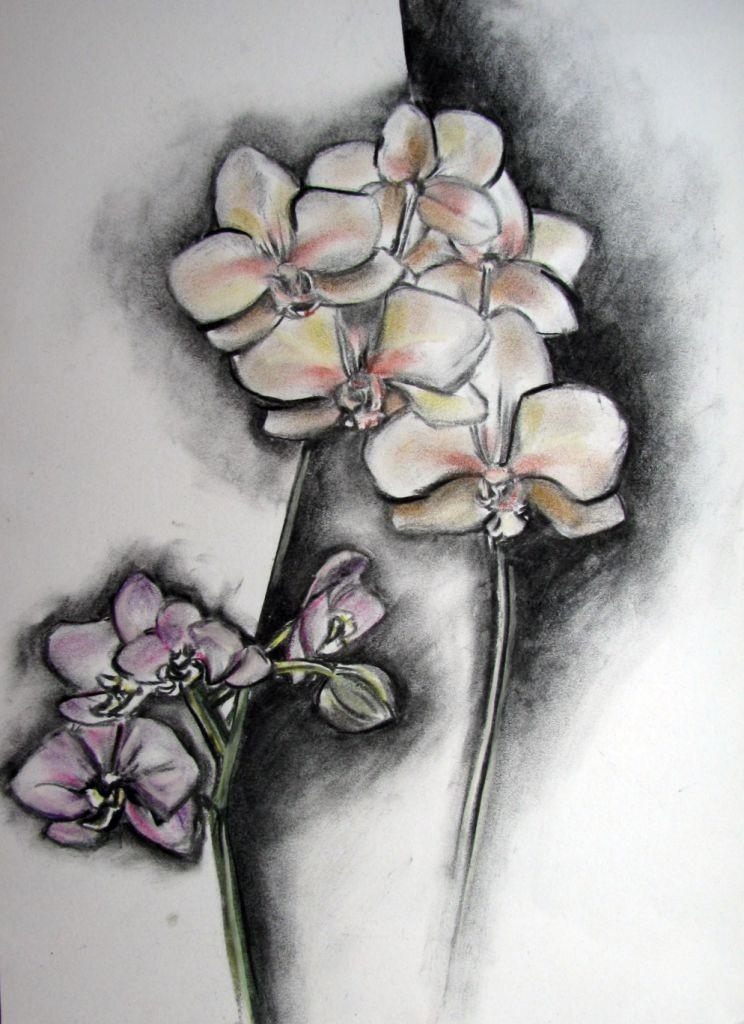 Orchidee (Zeichenkarton, 30x40cm)