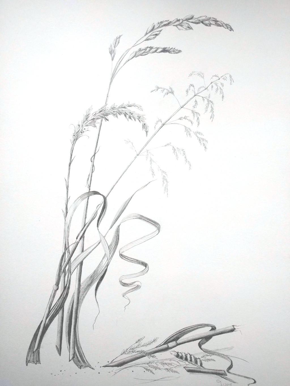 Gräser (Skizzenblock, 30x40cm)