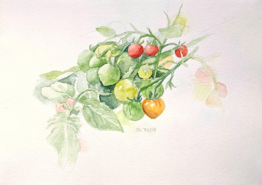 Tomaten reifen heran (Aquarellskizzenbuch)