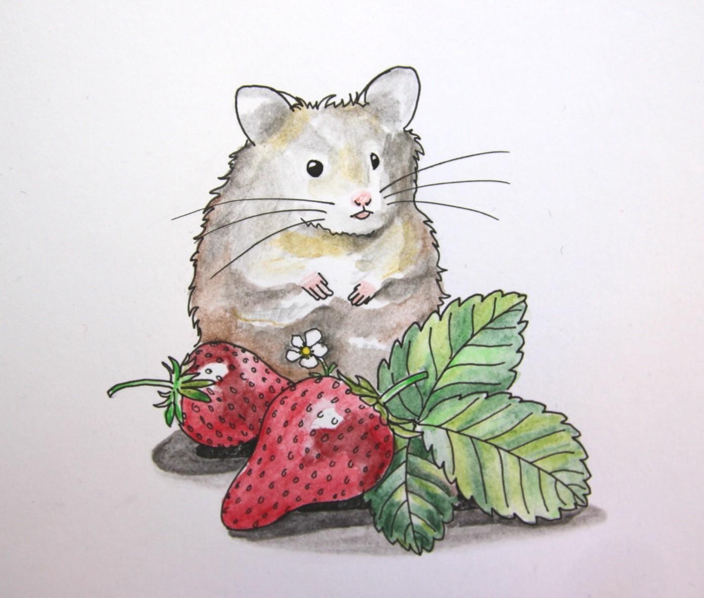 Erdbeerhamster (Zeichenpapier, 10x13cm)