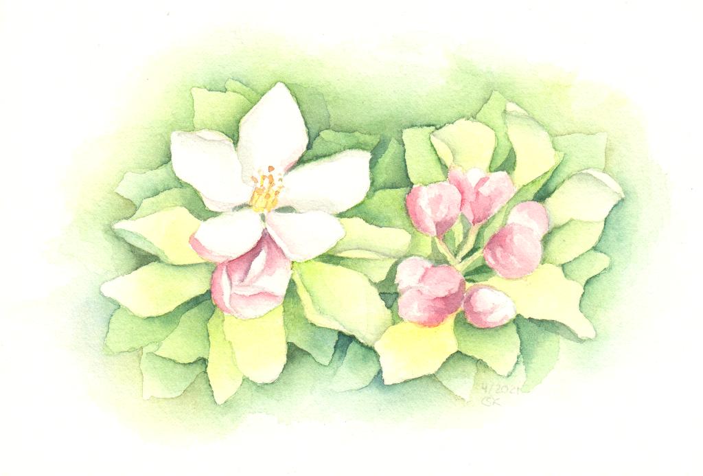 Apfelblüten (Aquarellpapier, 15x21 cm)