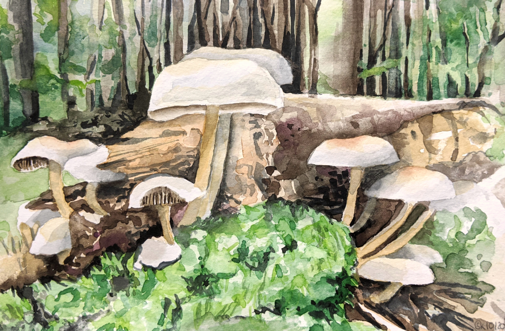 Weiße Pilzgruppe (Aquarellskizzenbuch)