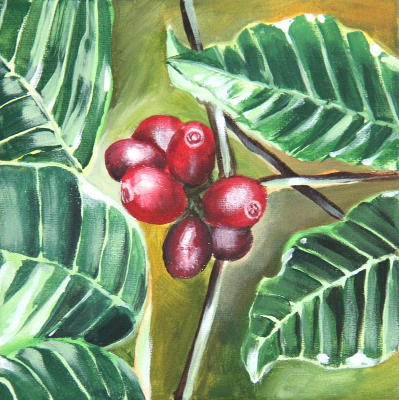 Kaffeepflanze (Leinwand, 20x20cm)