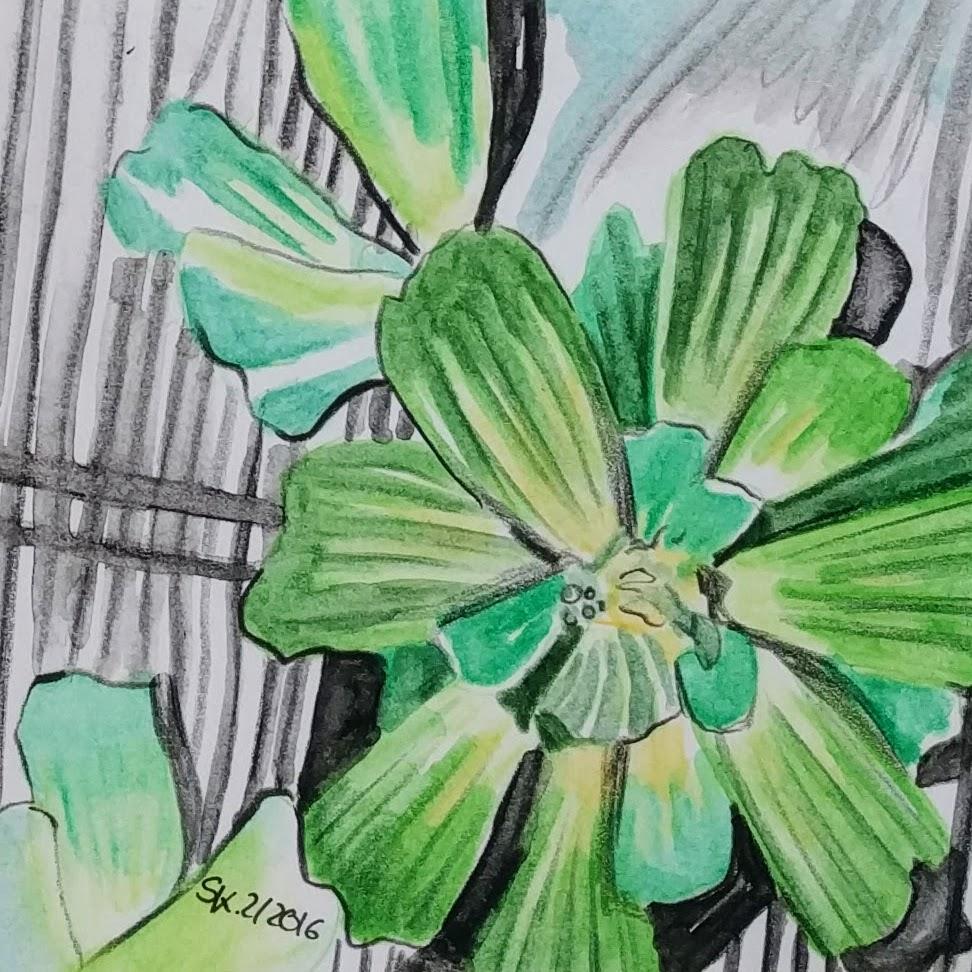 Wasserpflanze (Zeichenpapier, 9x9cm)