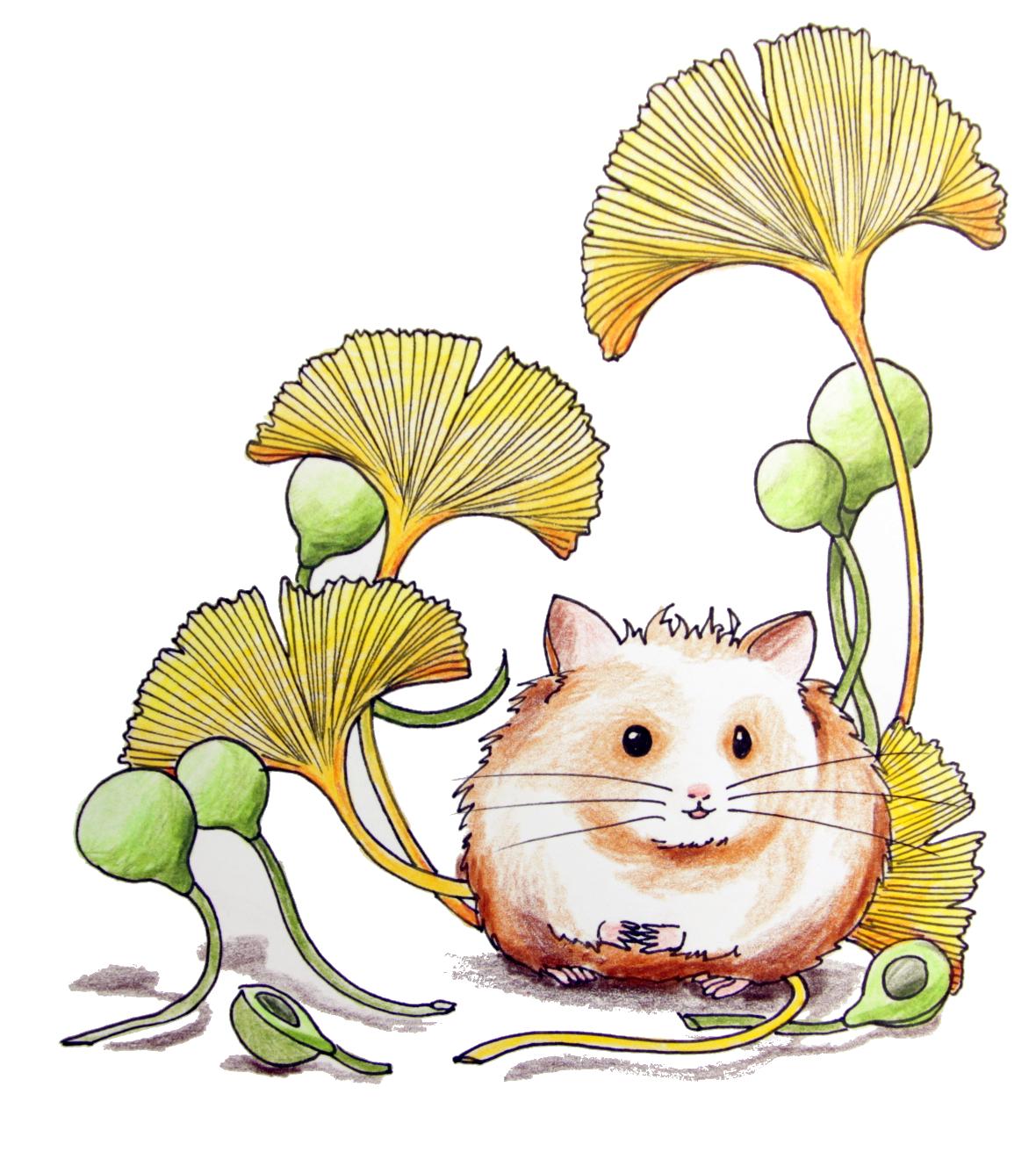 Ginkgo Hamster (Zeichenblock, 21x29cm)