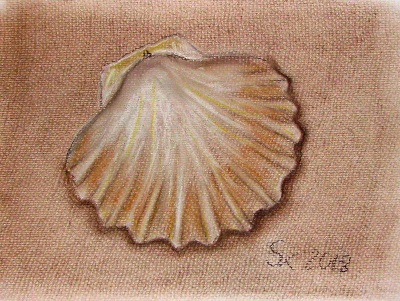 Muschel (Zeichenpapier, 21x29cm)