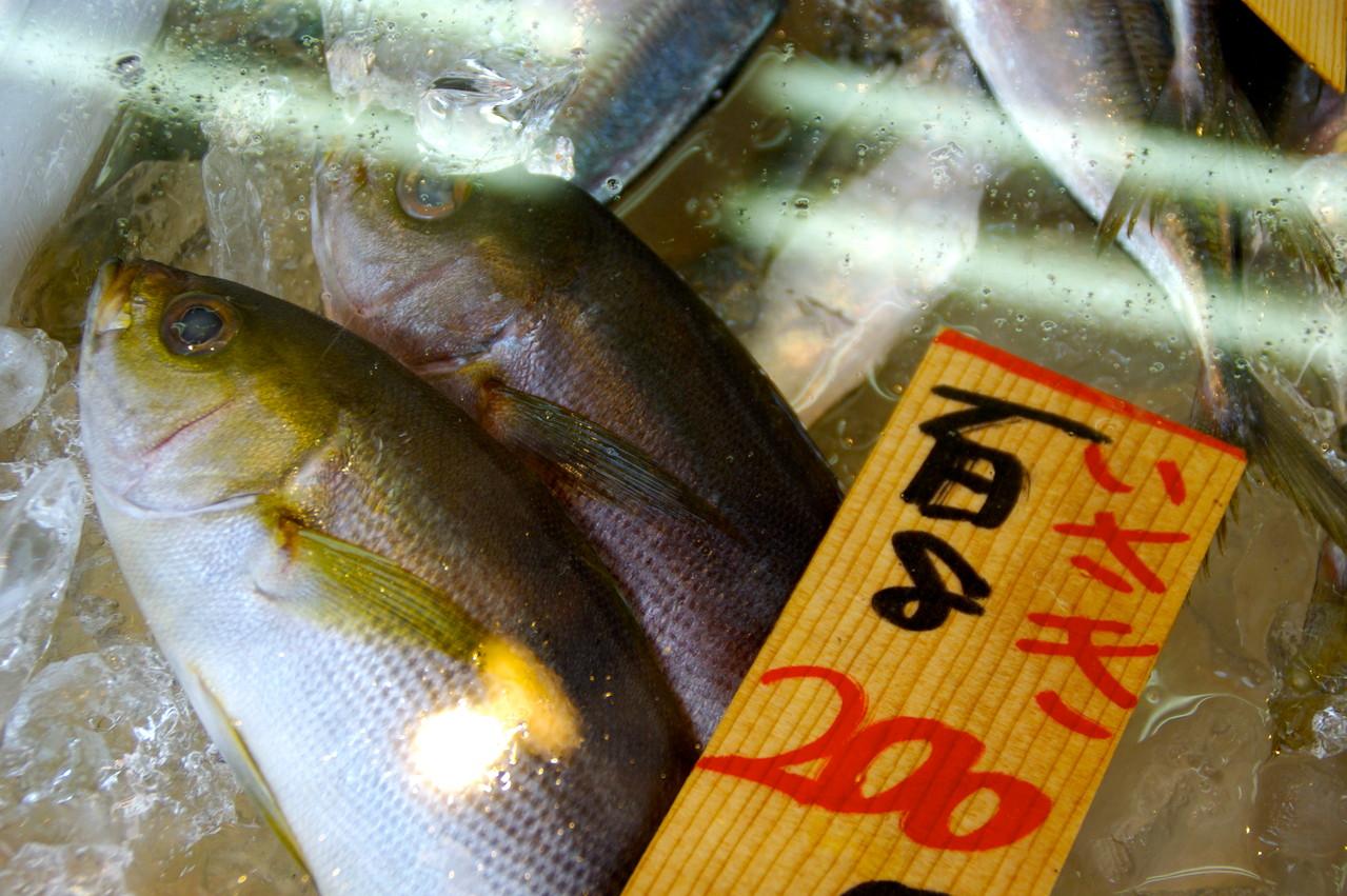 味の店川上屋 朝、築地にあがったピカピカの鮮魚が並んでいます。