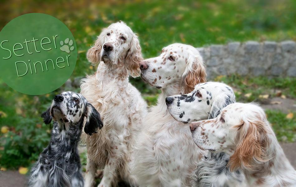 Setter Dinner - Ein Festschmaus für alle Hunde