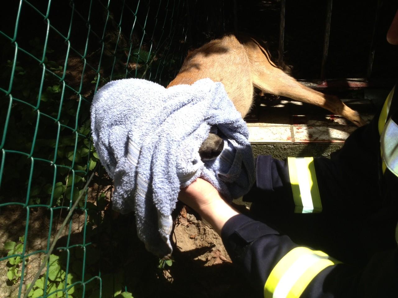 Tierrettung in Rondeshagen, 07.06.2013