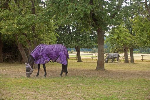 Deux chevaux bien vêtus à Argestorf