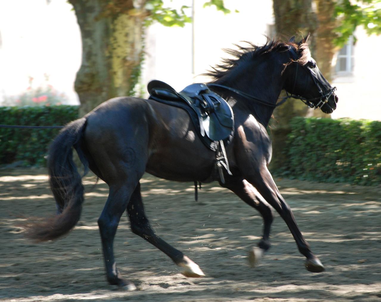 Equestria Tarbes 2012