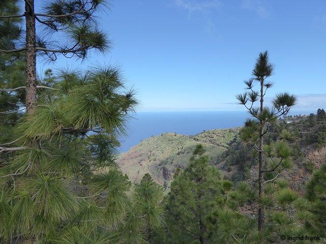18.02.2018 - Kiefernwald bei Puntagorda im Nordwesten von La Palma
