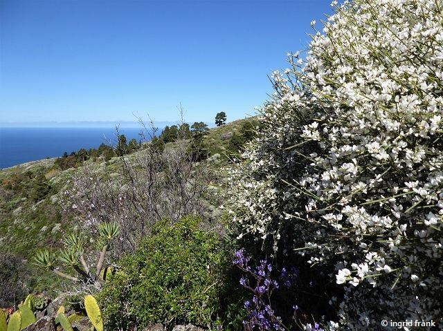 18.02.2018 - Umgebung von Las Tricias, La Palma