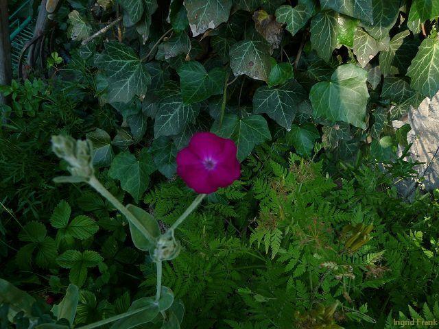 28.06.2010 - Im eigenen Garten