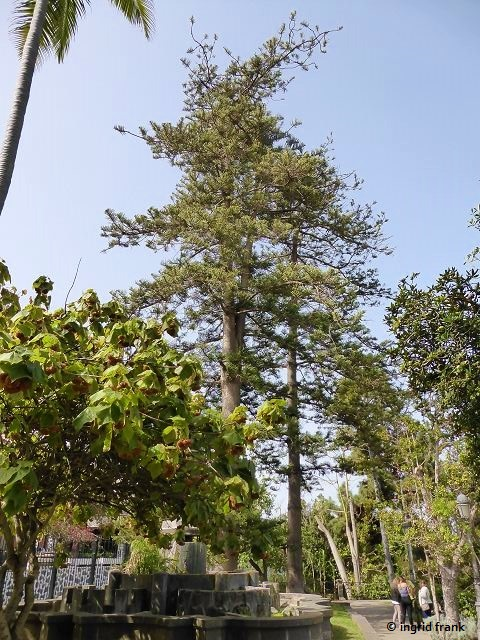 15.02.2020 - Gran Canaria, Arucas, Parque municipal