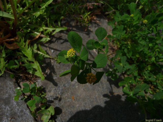 12.05.2010 - Im eigenen Garten
