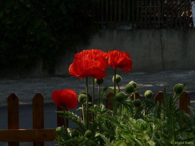 25.05.2014 - Garten in Wolfegg