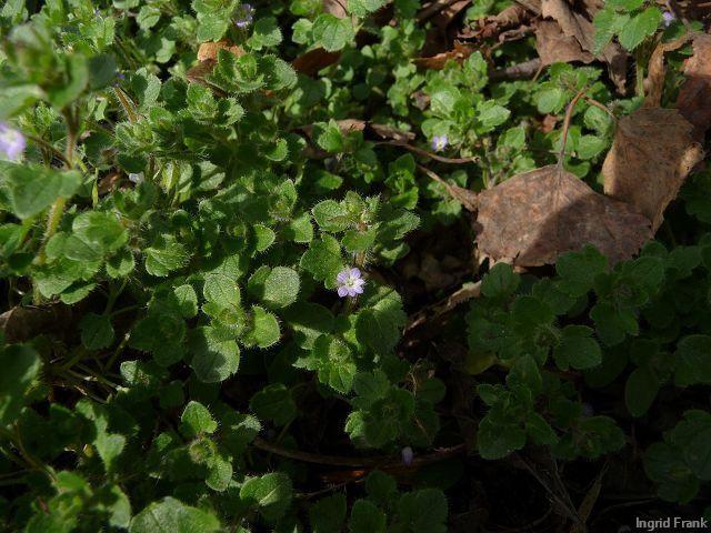 26.03.2011 - Im eigenen Garten