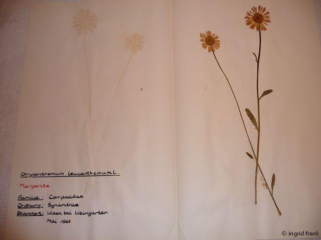 In meinem Herbarium von1969