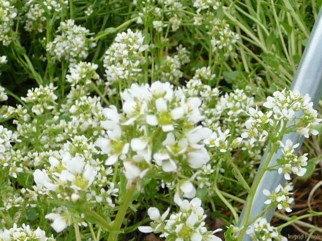 14.05.2010 - Kräutergarten auf dem Höchsten
