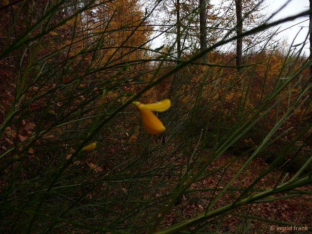13.11.2016 - Im Baienfurter Wald
