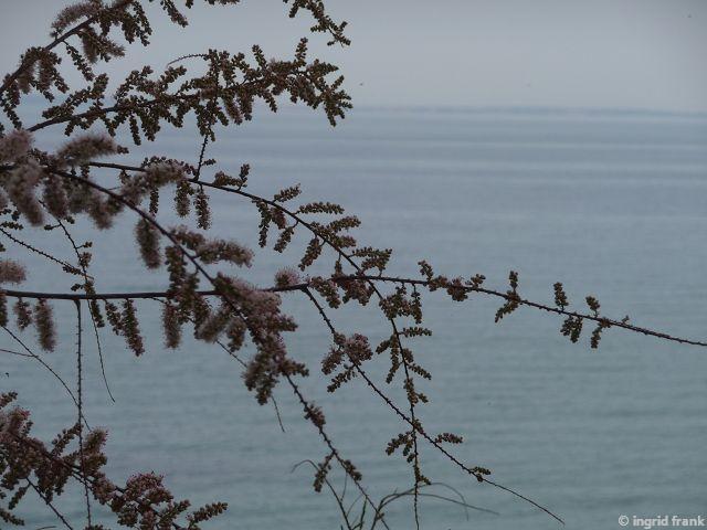 18.04.2015 - Griechenland, Beach Elia, Sithonia Chalkidiki