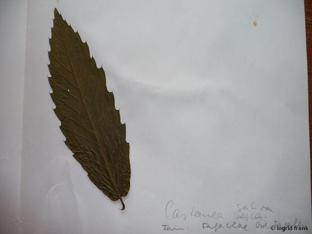 In meinem Herbarium von 1969 (Nachtrag)