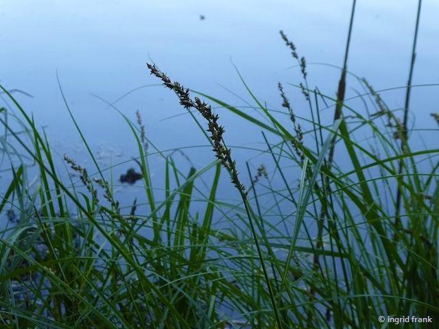 13.06.2021 - NABU-Exkursion im Lochmoos mit Ulrike Plewa