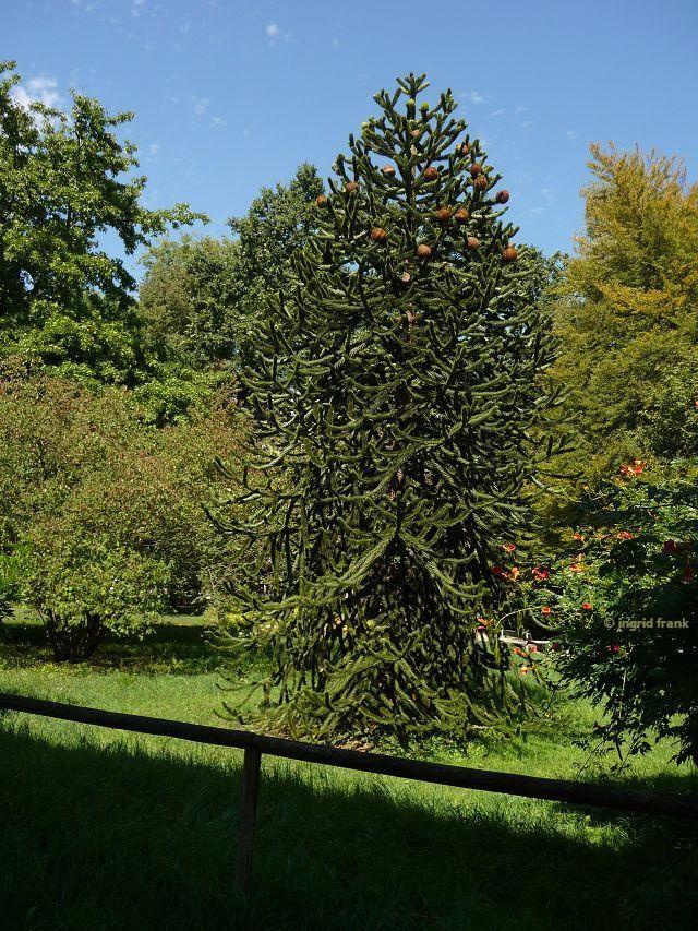 30.08.2015 - Botanischer Garten Universität Heidelberg