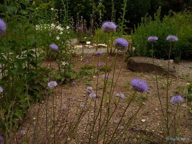 11.06.2016 - Botanischer Garten Universtät Heidelberg